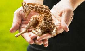 Petite Giraffe baby