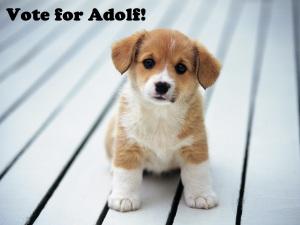 cute puppy Adolf