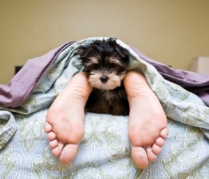 Dog in Bed with Feet