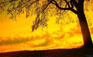 yellow_sky_and_autumn_tree-1920x1200