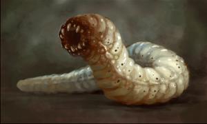 mongolian_death_worm2