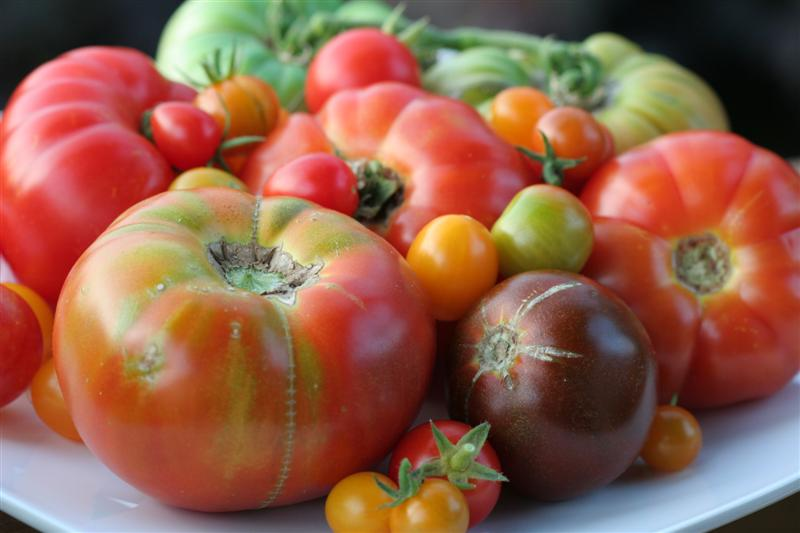 how to choose heirloom tomatoes