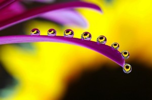 droplets-of-water-on-a-flower-macro