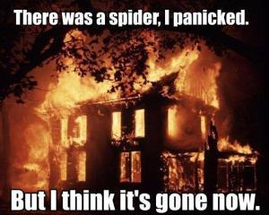 spider-panic