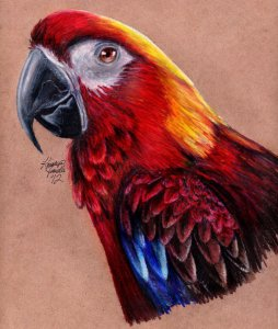 cuban_red_macaw_by_kristynjanelle-d58uh0u