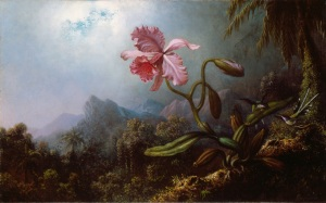 Two Hummingbirds with an Orchid, by Martin Johnson Heade, 1875.