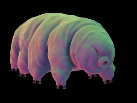 1448813165_It-turns-out-tardigrades-_2