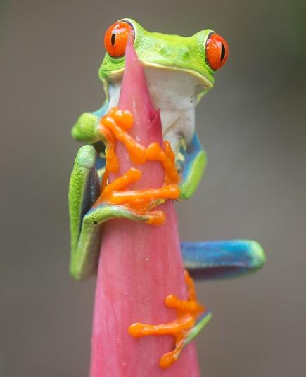frog-stem-2_2794020k