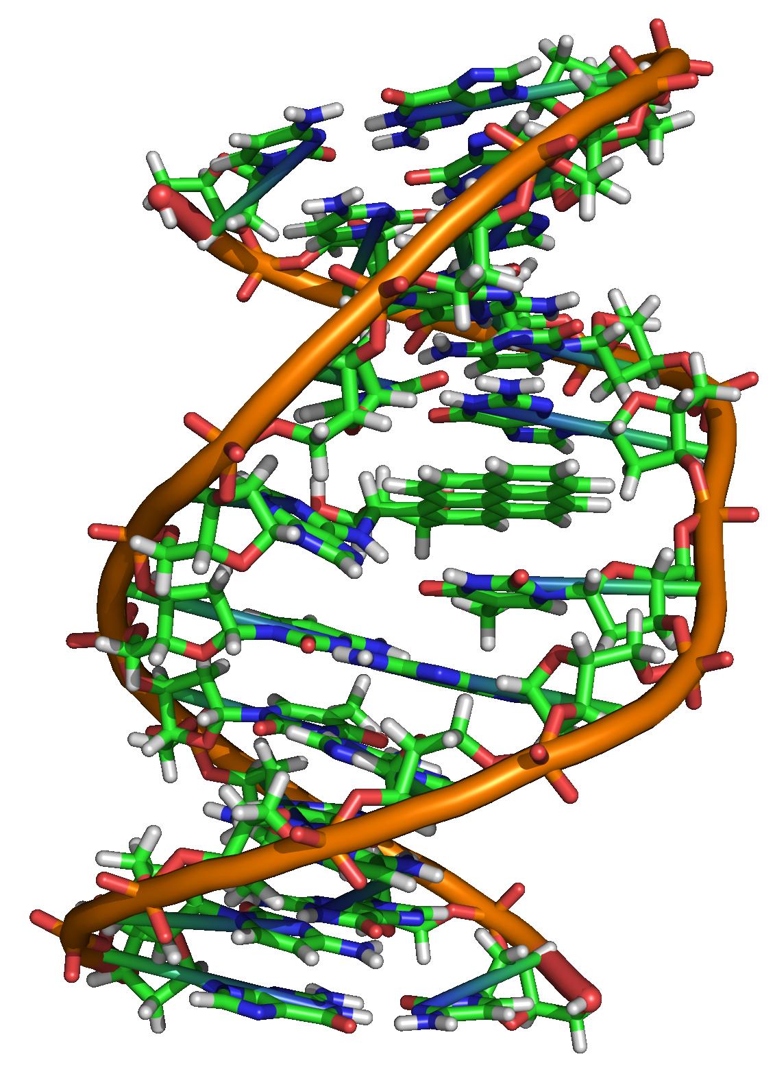 Benzopyrene_DNA_adduct_1JDG