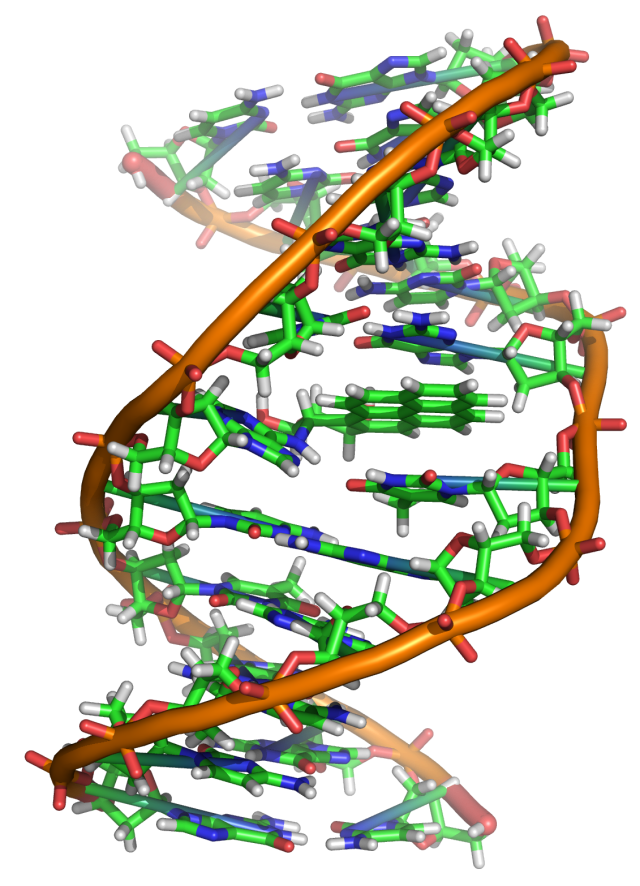 Benzopyrene_DNA_adduct_1JDG