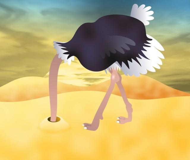 ostrich-clip-art
