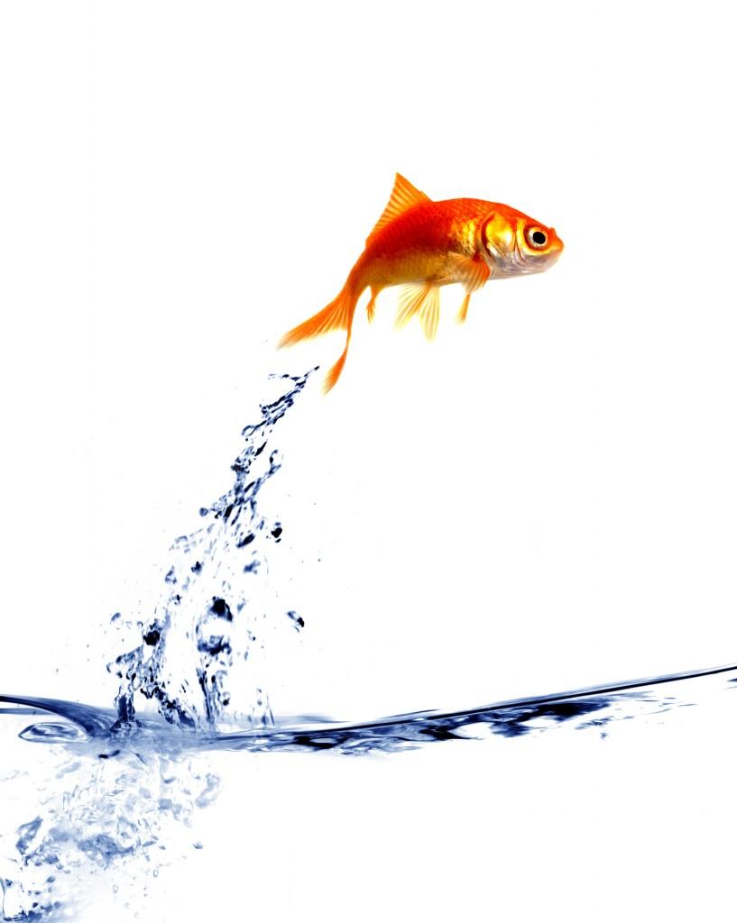 jumping-fish-817x1024