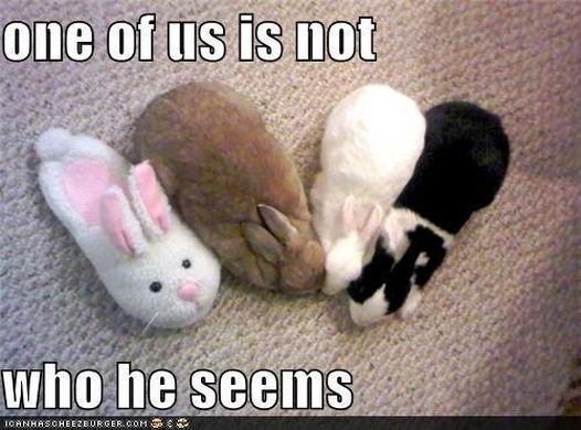 http _images4.fanpop.com_image_photos_16300000_silly-animals-animal-humor-16335485-500-371