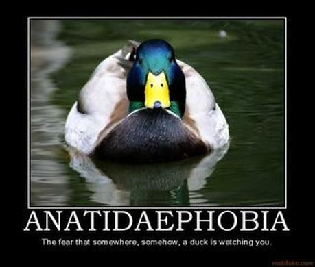 http _mentalillness-block2-f11.wikispaces.com_file_view_anatidaephobia.jpg_271016582_320x272_anatidaephobia