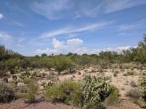 Sonoran Desert 4