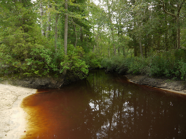 Jersey Pine Barrens