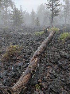 Lava Cast Forest1