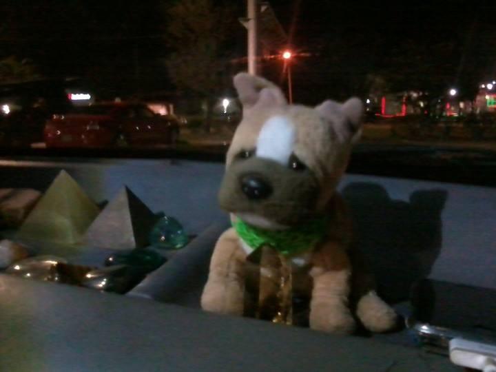 Travel Dog Chuck
