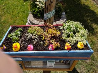 Little Free Library4