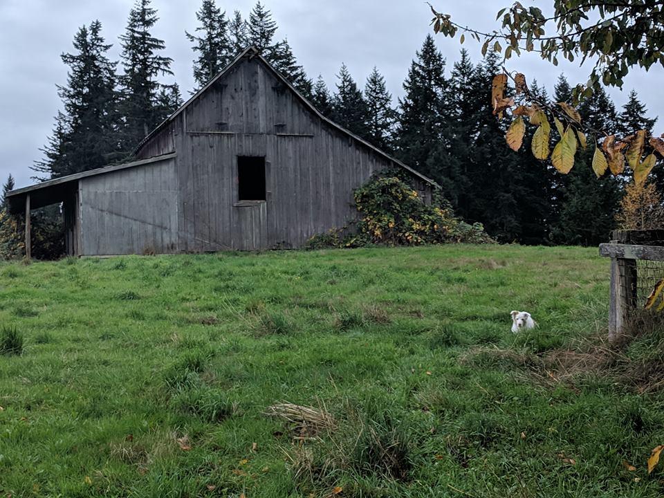 barn-door-missing