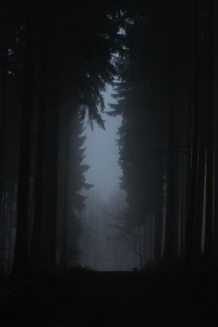 On a Dark Trail