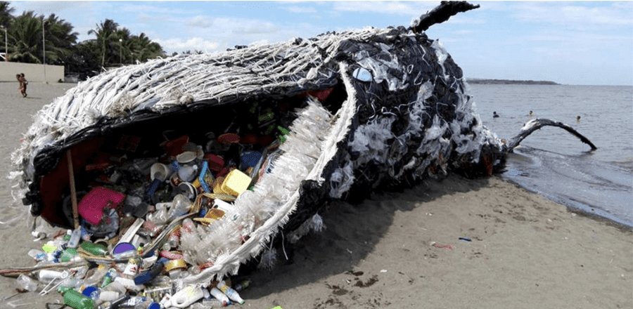 Shocking Picture Of Whale With 29kg Of Plastic In Its Stomach Alarms The World About The Huge Plastic Pollution Problem