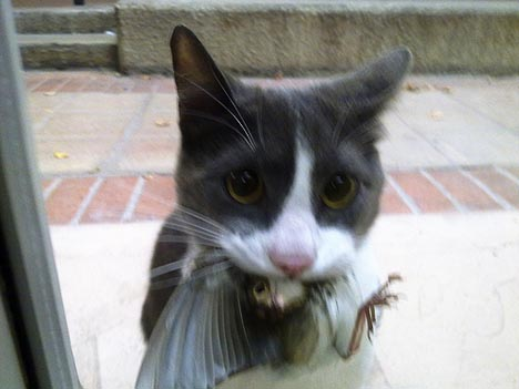 cat dead bird