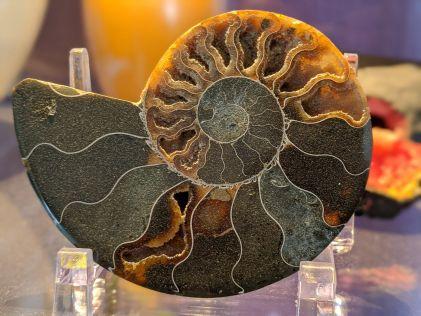 MyAmmonite1