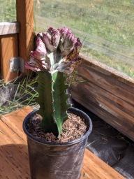 Succulent10